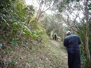 椿原生林を出る