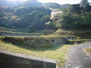 内幸泊の田んぼ