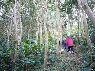椿原生林を行く