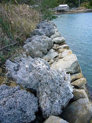 カセ(サンゴ)