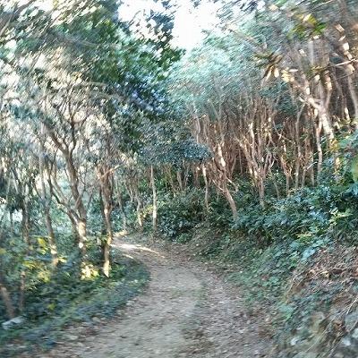 亀河原の椿林