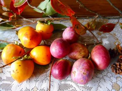 ムベと渋柿