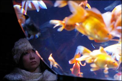 金魚とうにちゃん