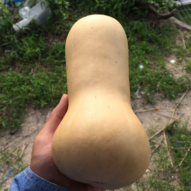 バターナッツ_単体