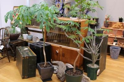 観葉植物 ヴィンテージ家具 トランク