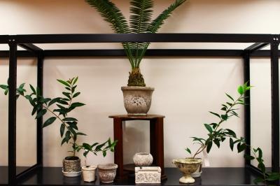 観葉植物 植木鉢 オリーブ ディオオン