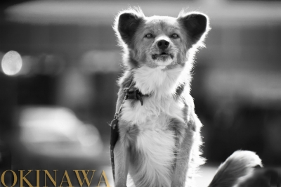 沖縄DOG
