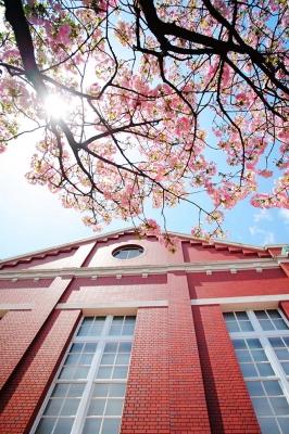 造幣局の八重桜