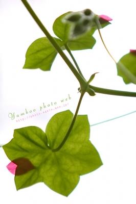 葉に花びら
