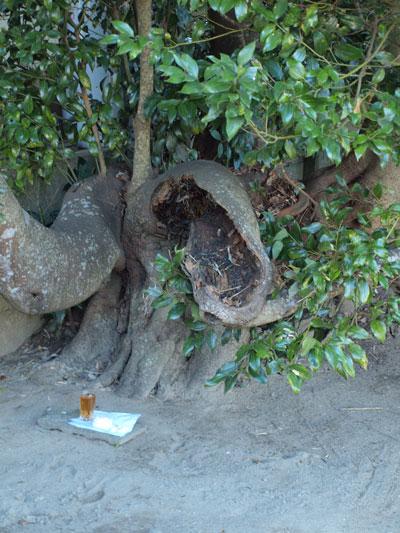平将門の木