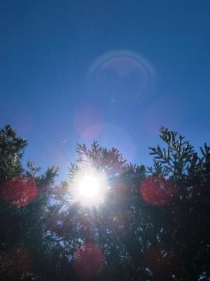 シャスタ・デイジーの画像 p1_16