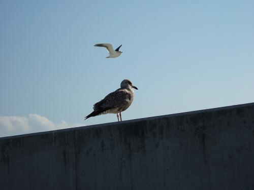 海鳥水鳥渡り鳥?鴎かもめ