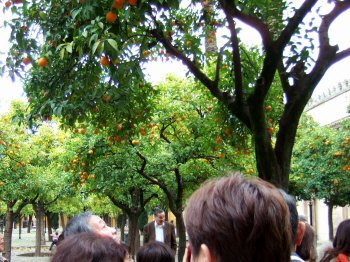 Espana España(エスパーニャ)SPAIN 世界遺産コルドバcordobaコルドバアルカサル通りアルカサルアルカサールAlcazarアンダルシア地方メスキータトリホス通りC.Torijosメスキータオレンジの中庭