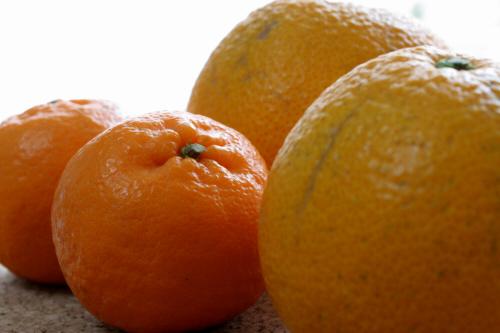 旧因島市瀬戸内海因島八朔はっさくとポン柑ぽんかんオレンジ柑橘類ミカンフルーツグルメ