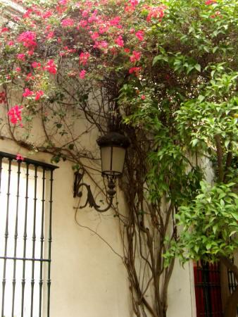España(エスパーニャ)SPAINフラメンコの本場セビリヤへSEVILLAセビリアセビージャセビーリャアルカサルアルカーサルアルカサール入り口に咲く赤い花