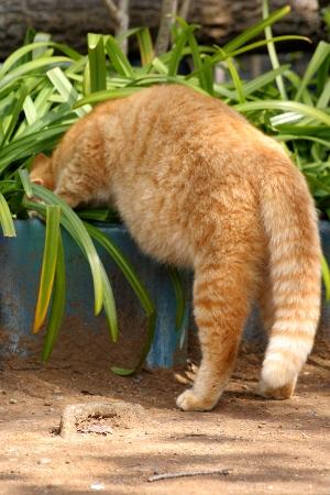 ニャンコ写真ノラネコ写真のら猫野良猫フォト