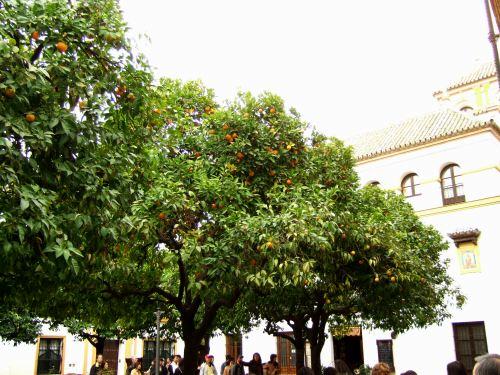 España(エスパーニャ)SPAINフラメンコの本場セビリヤへSEVILLAセビリアセビージャセビーリャサンタ・クルス街Barrio de Santa Cruz旧市街ユダヤ人街パティオ風な広場オレンジの木