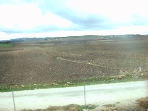 EspañaエスパーニャSPAINセビリヤSEVILLAアンダルシア地方セビリアセビージャセビーリャからコスタ・デル・ソル、ミハスへCOSTA DEL SOL Mijasヒマワリ畑?向日葵畑?