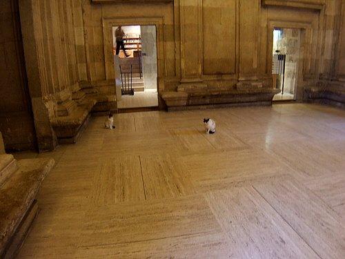 エスパーニャSPAINアンダルシア地方グラナダGRANADA世界遺産世界文化遺産アルハンブラ宮殿Palacio de la Alhambraカルロス5世宮殿野良猫