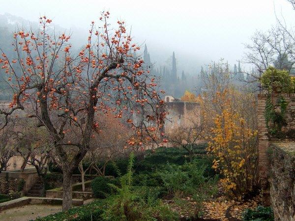 エスパーニャSPAINアンダルシア地方グラナダGRANADA世界遺産世界文化遺産アルハンブラ宮殿Palacio de la Alhambra王宮の庭に日本から持ってこられた柿の木