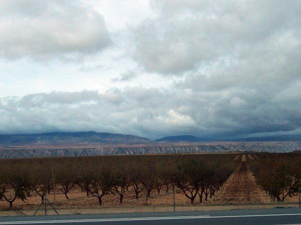 エスパーニャSPAINアンダルシア地方高速道路A92号線沿いに見えた風景景色オリーブ畑オリーブの木
