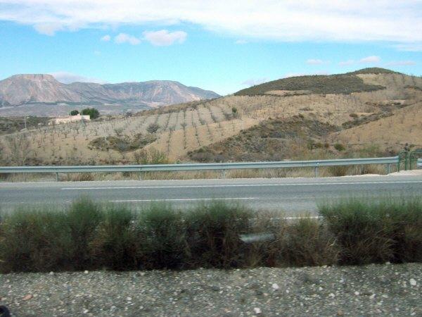 エスパーニャSPAINアンダルシア地方高速道路A92号線沿いに見えた風景景色葡萄畑ぶどう畑