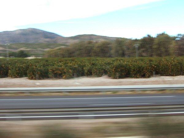エスパーニャSPAINアンダルシア地方グラナダからバレンシア地方バレンシア高速道路A92号線沿いに見えた風景景色サービスエリアSAで見かけた風景景色ミカン畑