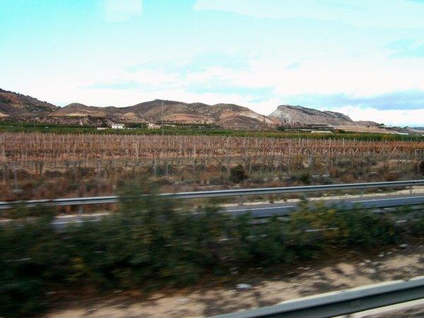 エスパーニャSPAINアンダルシア地方グラナダからバレンシア地方バレンシア高速道路E15号線沿いに見えた風景景色葡萄畑葡萄の木ぶどう畑