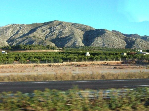 エスパーニャSPAINバレンシア地方バレンシア州都ホテルホリデイインバレンシア高速道路E15沿いに広がるオレンジ畑オレンジの木