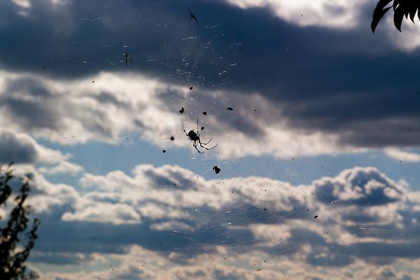 よく見ると小さいクモが二匹いる