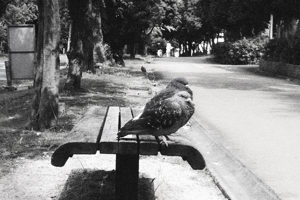 油断するとそこら中の鳩が押し寄せてくる恐怖感がたまらない