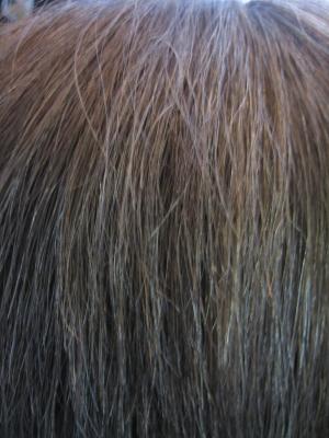 ダメージヘア チリチリ 陰毛