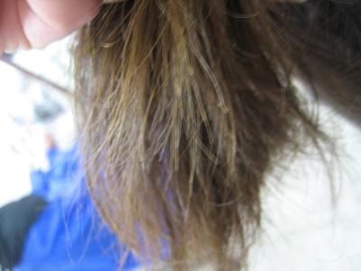 40代 50代 60代 髪の毛