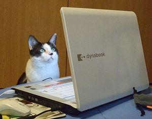 パソコン猫