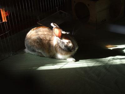 陽だまりのうさぎ