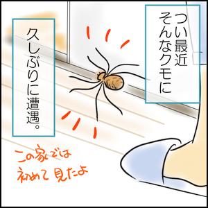つい最近そんなクモに久しぶりに遭遇。