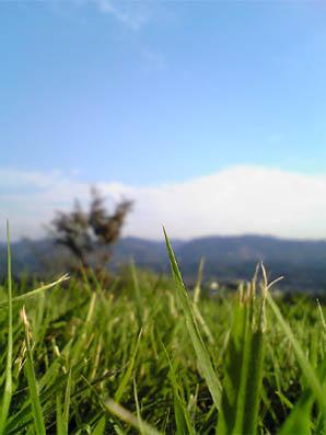 芝生ってきれい