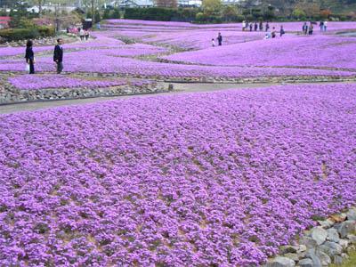 三田の花じゅうたん