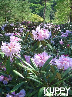十津川村石楠花祭り