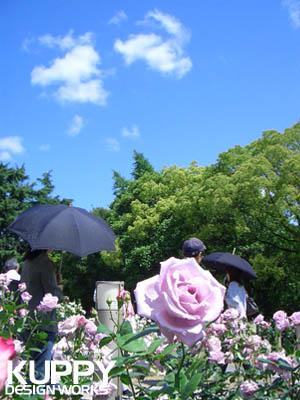 靱公園のバラ1