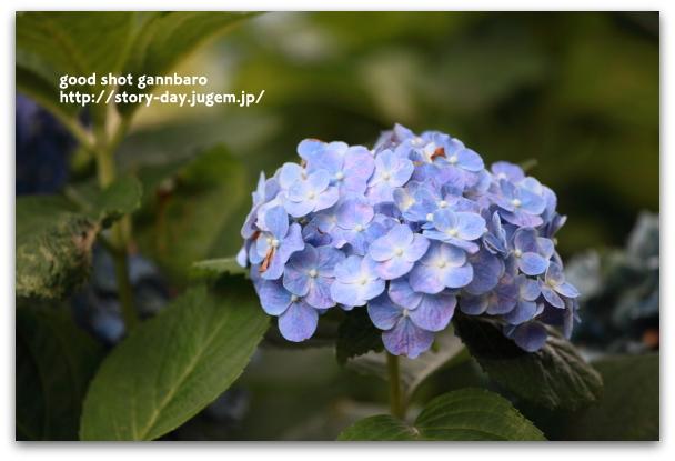 IMG_4245a.JPG