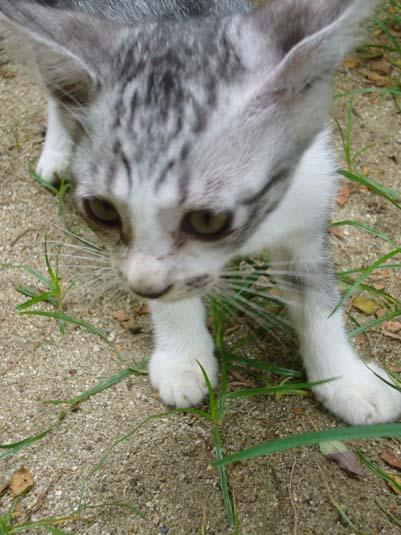2007.08.31 警固公園の子ネコ〜アップ〜