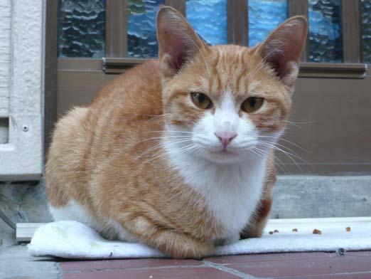 2008.10.25 熊本の家の近所のネコ