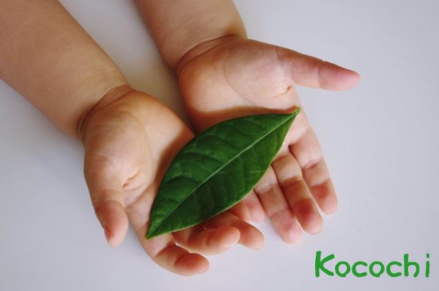Kokochi / ここち