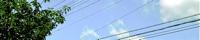 - amnoidea - banner