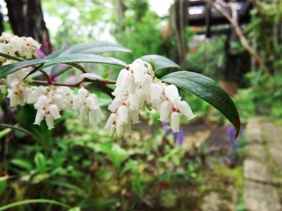 17・4・22 樫野庭園 (13).JPG