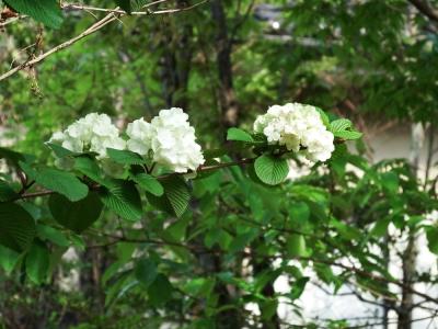 17・4・22 樫野庭園 (42).JPG