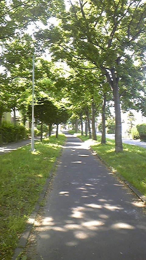 kokoro_1.JPG