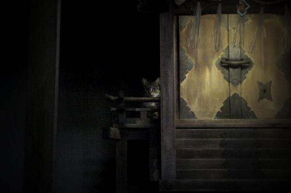 神の使い風な猫