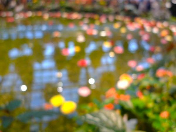 薔薇の花が浮かぶ